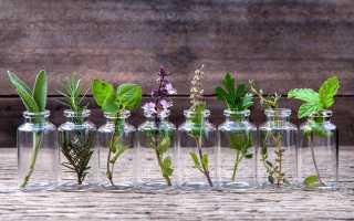 Внимание запахам. Плюсы и минусы ароматерапии