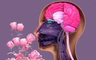 Названы самые частые нарушения мозга после коронавируса — 7 августа 2021 — Sport24