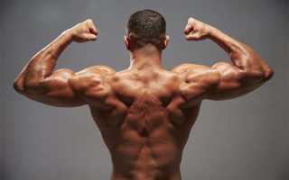 Тренировка спины дома: упражнения с гантелями для мышц спины