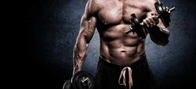 Упражнения и программа тренировок для набора мышечной массы